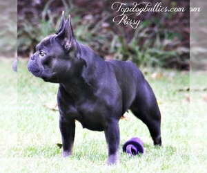 Mother of the French Bulldog puppies born on 03/15/2020