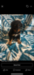Bernedoodle Puppy For Sale in MOUNT MORRIS, MI, USA