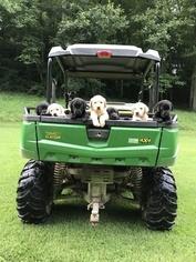 Labrador Retriever Puppy for sale in MEALLY, KY, USA