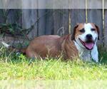 Small #119 Beagle Mix