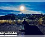 Small Photo #2 Dutch Shepherd Dog Puppy For Sale in SIERRA VISTA, AZ, USA