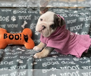 English Bulldog Puppy for sale in COVINGTON, WA, USA