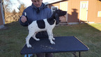 German Shorthaired Pointer Puppy For Sale in NORTH JUDSON, IN,