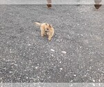 Small #1 Cairn Terrier
