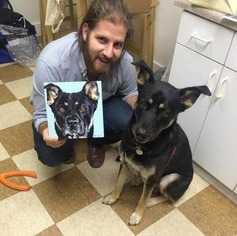 German Shepherd Lab mix to adopt in Nashville TN