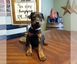 Small #11 Doberman Pinscher