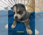 Image preview for Ad Listing. Nickname: Chance