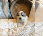 Small #14 Great Pyrenees