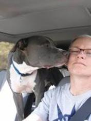 Prince - American Staffordshire Terrier / Mixed (short coat) Dog For Adoption