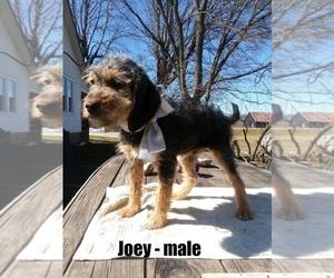 Poogle Puppy for sale in CLARKRANGE, TN, USA