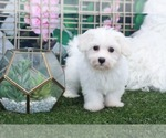 Image preview for Ad Listing. Nickname: Brownie