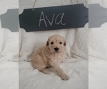 Image preview for Ad Listing. Nickname: Ava