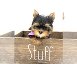 Small #11 Yorkshire Terrier