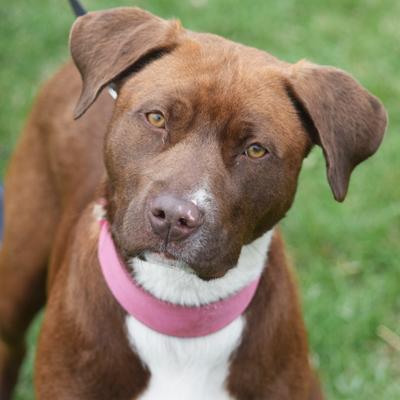 Senior Dog Rescue Groups