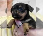 Image preview for Ad Listing. Nickname: Roxie