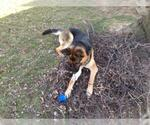 Small #98 German Shepherd Dog