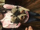 Boy and girl for sale 1 month old