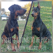 Doberman Pinscher Puppy For Sale in DE LEON SPRINGS, FL, USA