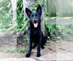 Small #11 German Shepherd Dog Mix