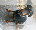 Small #1 Doberman Pinscher