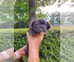Image preview for Ad Listing. Nickname: Mr Brindle