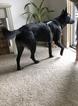 Texas Heeler Dog For Adoption in ORANGE, CA, USA