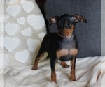 Small #1 Miniature Pinscher