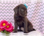 Small #6 Labrador Retriever