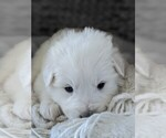 Small #66 Great Pyrenees