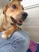 Mutt Dog For Adoption in Detroit Lakes, MN