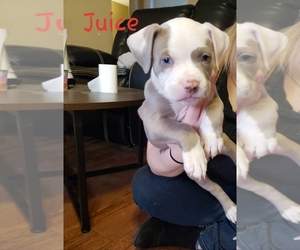 Puppies For Sale Near Fairfield California Usa Page 1 10 Per