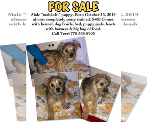 Malchi Puppy for Sale in LULA, Georgia USA