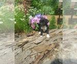 Puppy 1 Border Collie-Unknown Mix