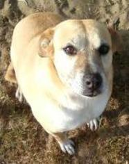 Snappy - Terrier Dog For Adoption