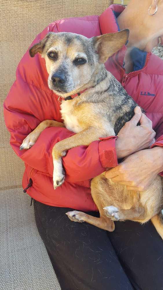 Rescue Small Dogs North Carolina