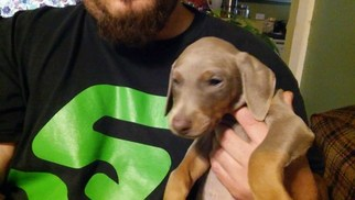 Doberman Pinscher Puppy for sale in ROCKWELL, NC, USA