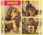 Puppy 4 Bloodhound