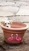 Goberian Puppy For Sale in SARATOGA, CA, USA