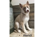 Small Photo #10 Siberian Husky Puppy For Sale in DEARBORN, MO, USA