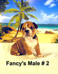 Beautiful English Bulldog Puppies For Sale