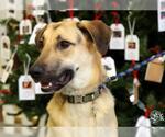 Small #497 German Shepherd Dog Mix