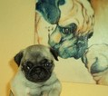 Pug Puppy For Sale in NEW CASTLE, IN, USA