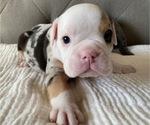 Small #7 Bulldog