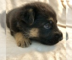Small #16 German Shepherd Dog
