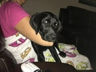 Labrador Retriever Puppy For Sale in CORPUS CHRISTI, TX, USA