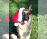 Small #1075 German Shepherd Dog