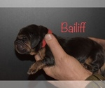 Small #4 Bloodhound