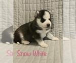 Image preview for Ad Listing. Nickname: Snow White