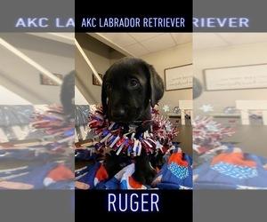 Labrador Retriever Puppy for Sale in TALKING ROCK, Georgia USA