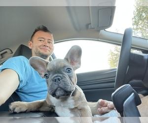 French Bulldog Puppy for sale in CARMICHAEL, CA, USA